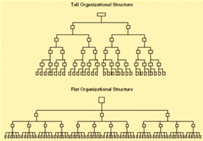 A comparison of the similarities and differences between organizational structures